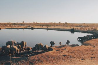 Defending Wildlife: The Road to SDG 16 in Mali