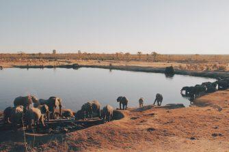 Defending Wildlife: The Road to SDG 16 in Mali