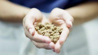 The Raw Chocolate Company: Linus Gorpe Interview