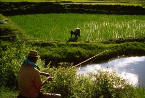 2001,Madagascar - Rice production and fish farming. Man fishing while a farmer weeds the nearby rice field.