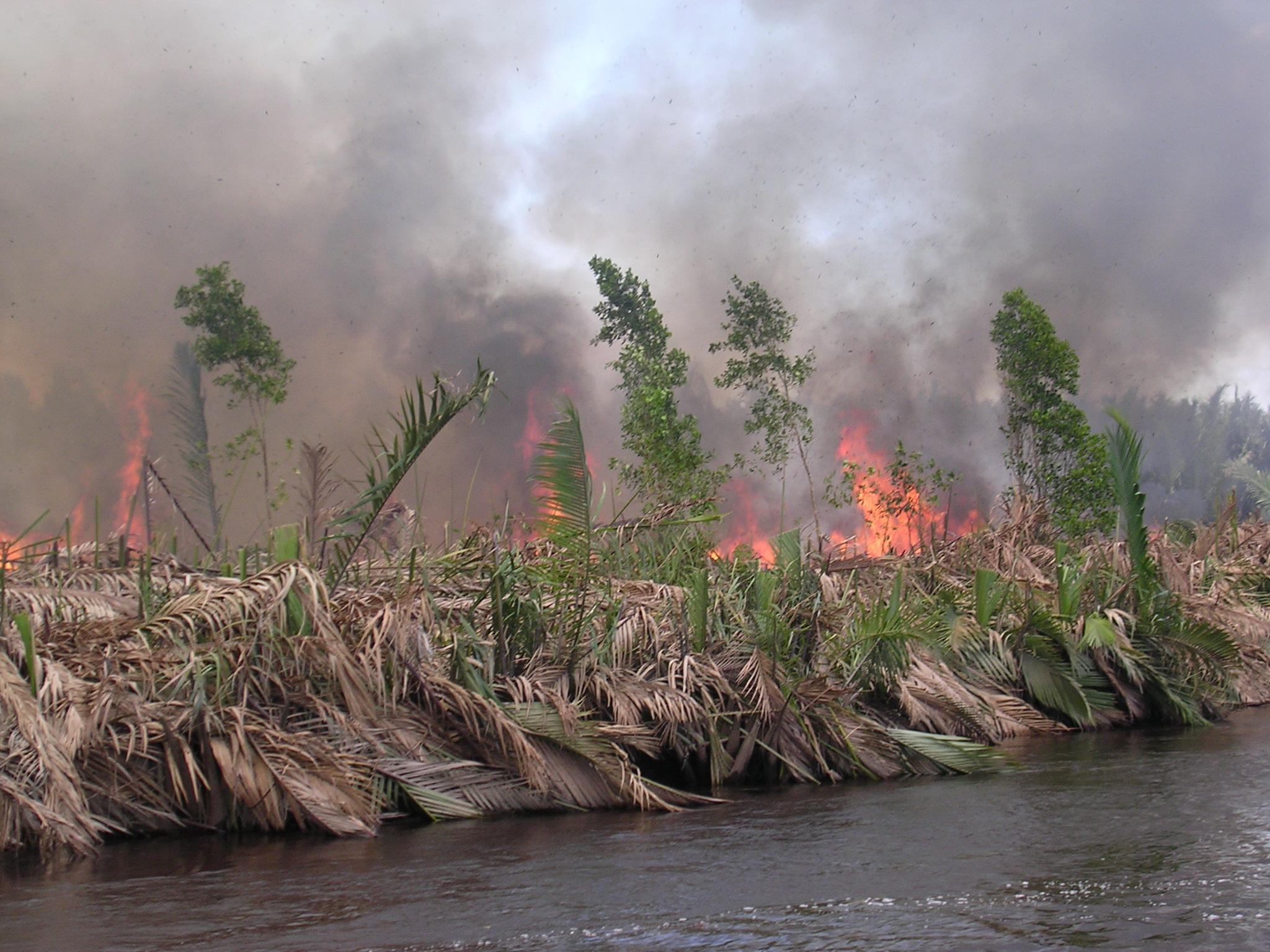 burning peatland in kalimantan, indonesia (pieter van eijk)