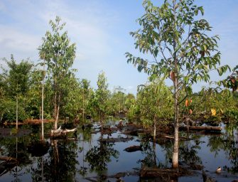 Peat Swamps: The Forgotten Fix for Climate Change