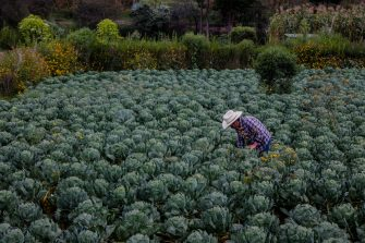 Making climate finance work for adaptation in agriculture
