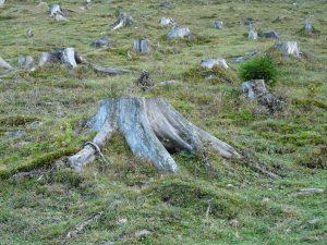 deforestation-62486_1920