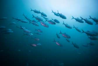 Our Oceans: A Call to Protect our Planet's Beating Blue Heart