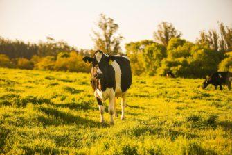 Clover Sonoma: Dairy Delights