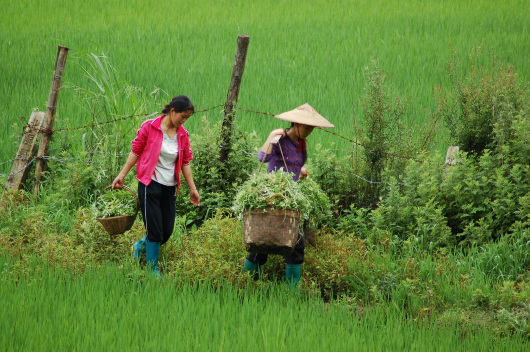 Female Farmers in China