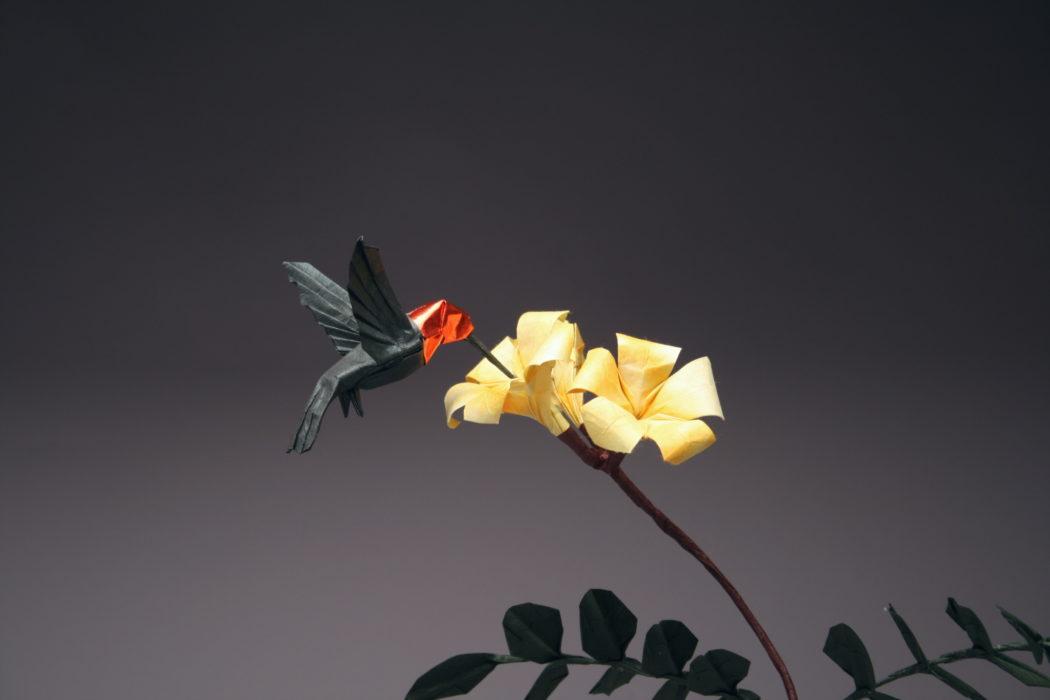 Annas Hummingbird Trumpet Blossoms