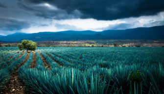 Sombra Mezcal Blazes a Sustainable Path for Agave Spirits