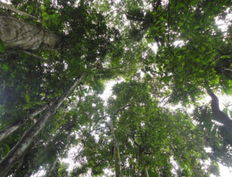 Forests: Our Hope for Reducing Climate Change