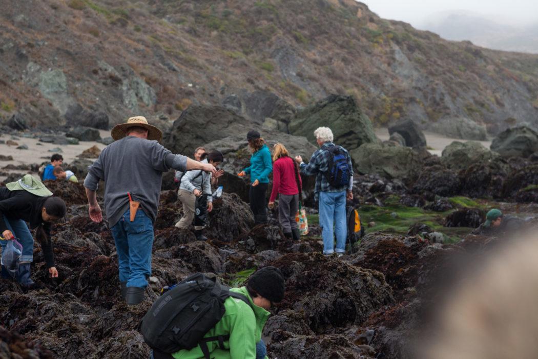 Kelp Harvest 2