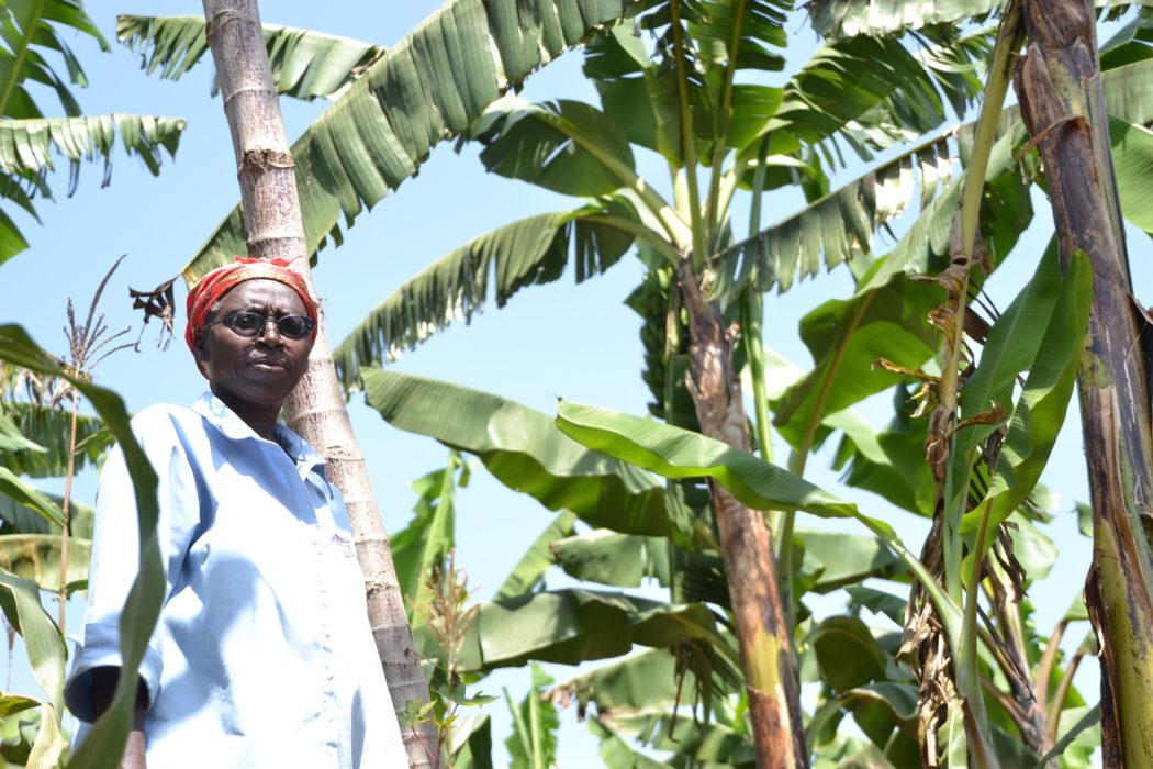 Ugandan Green Banana Partner Farmer