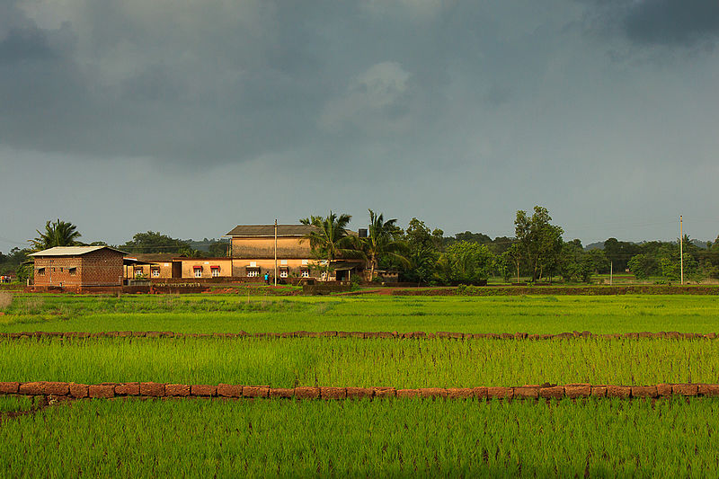 800px-A_farm,_sights_culture_rural_Maharashtra_India_Monsoons_2015