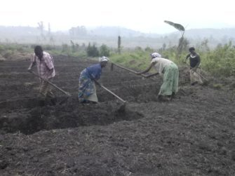 Eradicating hunger and climate change in Uganda: The role of crop trees