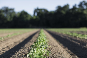 The Plant Café Organic: A Diet For A Healthier Future