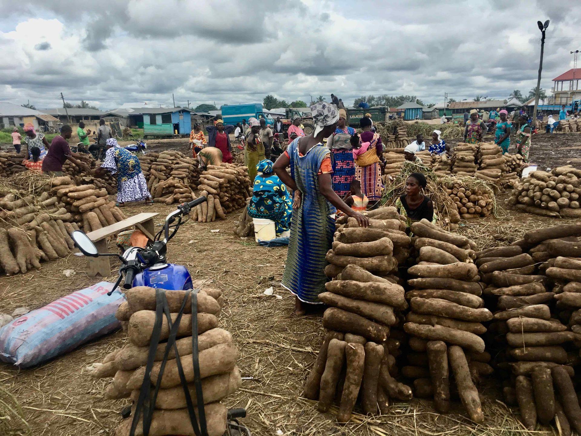 Ghana's Agriculture